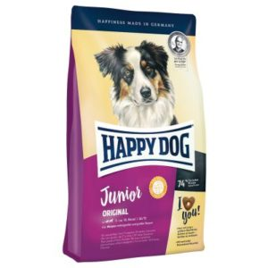 Happy dog junior chien